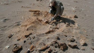 Photo of Fossil: Ancient whale with legs could stand on land and swim in water