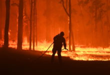 Photo of Three in four Australians affected by bush fires, survey finds