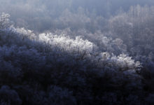 Photo of Frosty trees