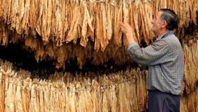 Photo of Gevgelija – known for its tobacco even two centuries ago