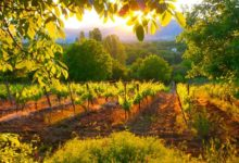 Photo of Tikvesh region – the cradle of viticulture and winemaking