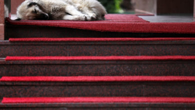Photo of Napping on the red carpet