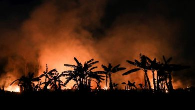 Photo of Fires on the rise in Brazil's Amazon despite ban