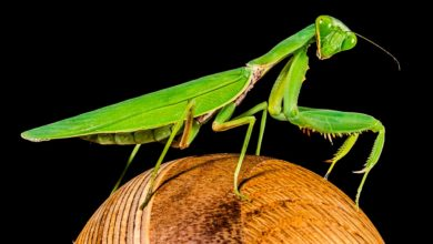 "Photo of Kina Pompeon e quajti ""mantis"""
