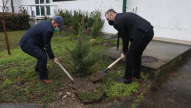 Photo of Trees planted to commemorate